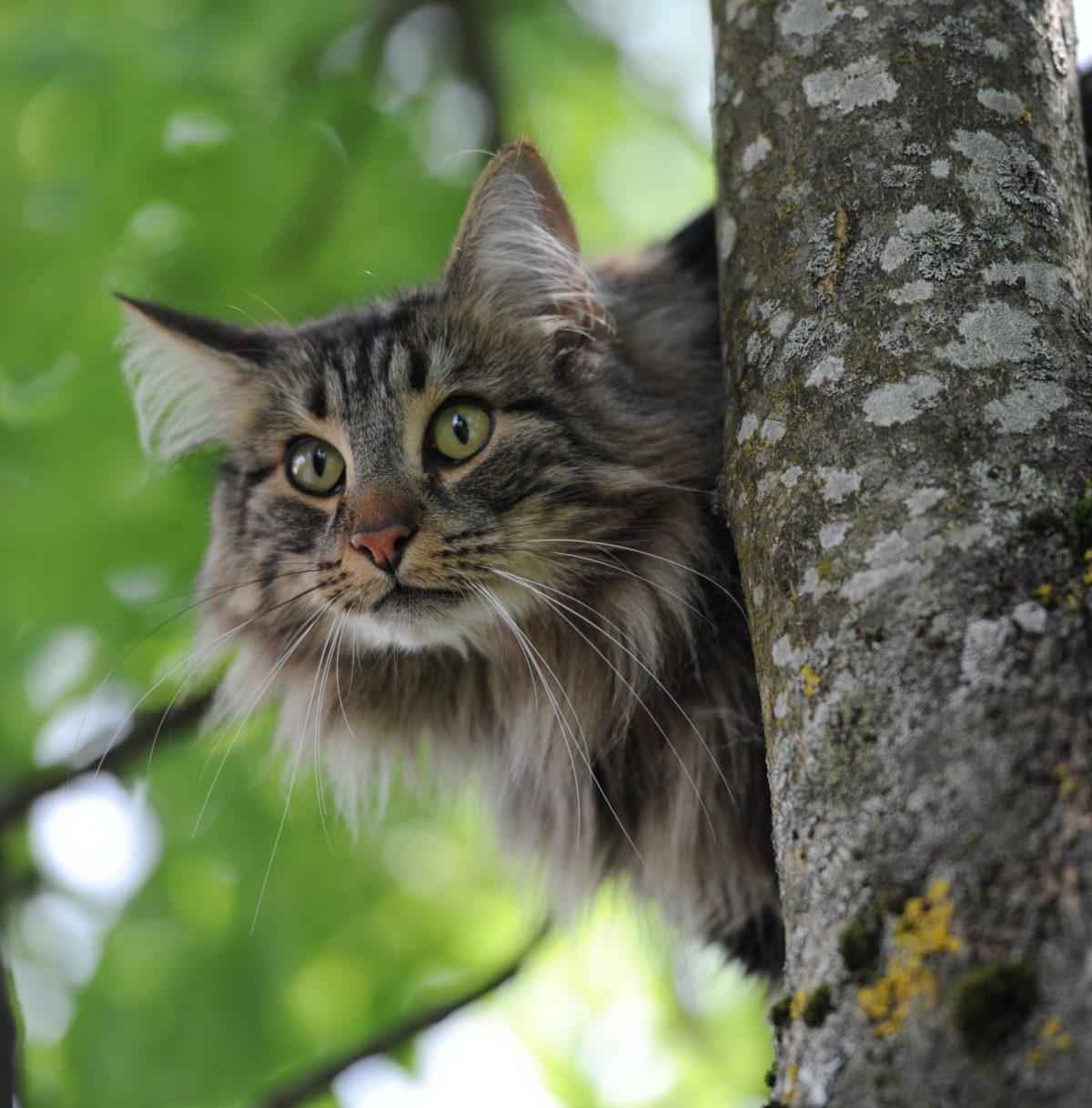 8. mai 2013: Klart katter kan klokka