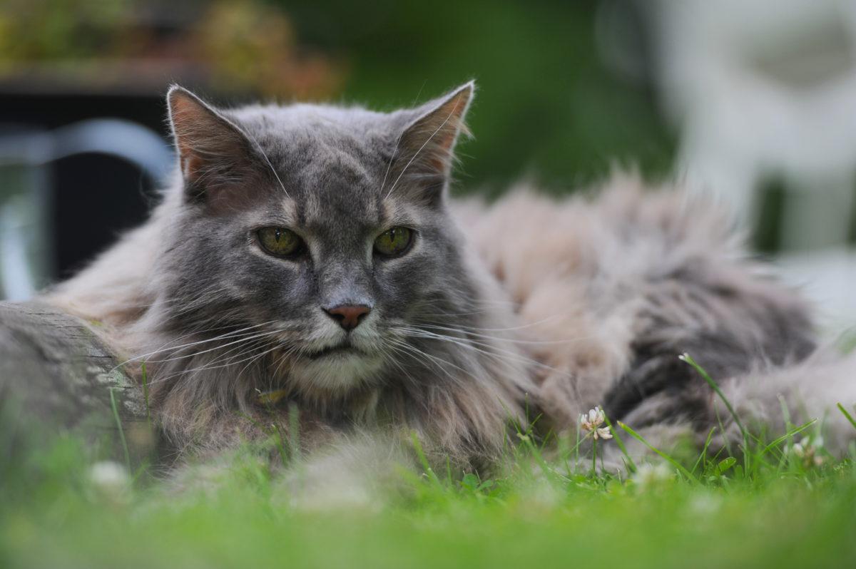 16. april 2014: Tid sammen med katter er aldri bortkastet